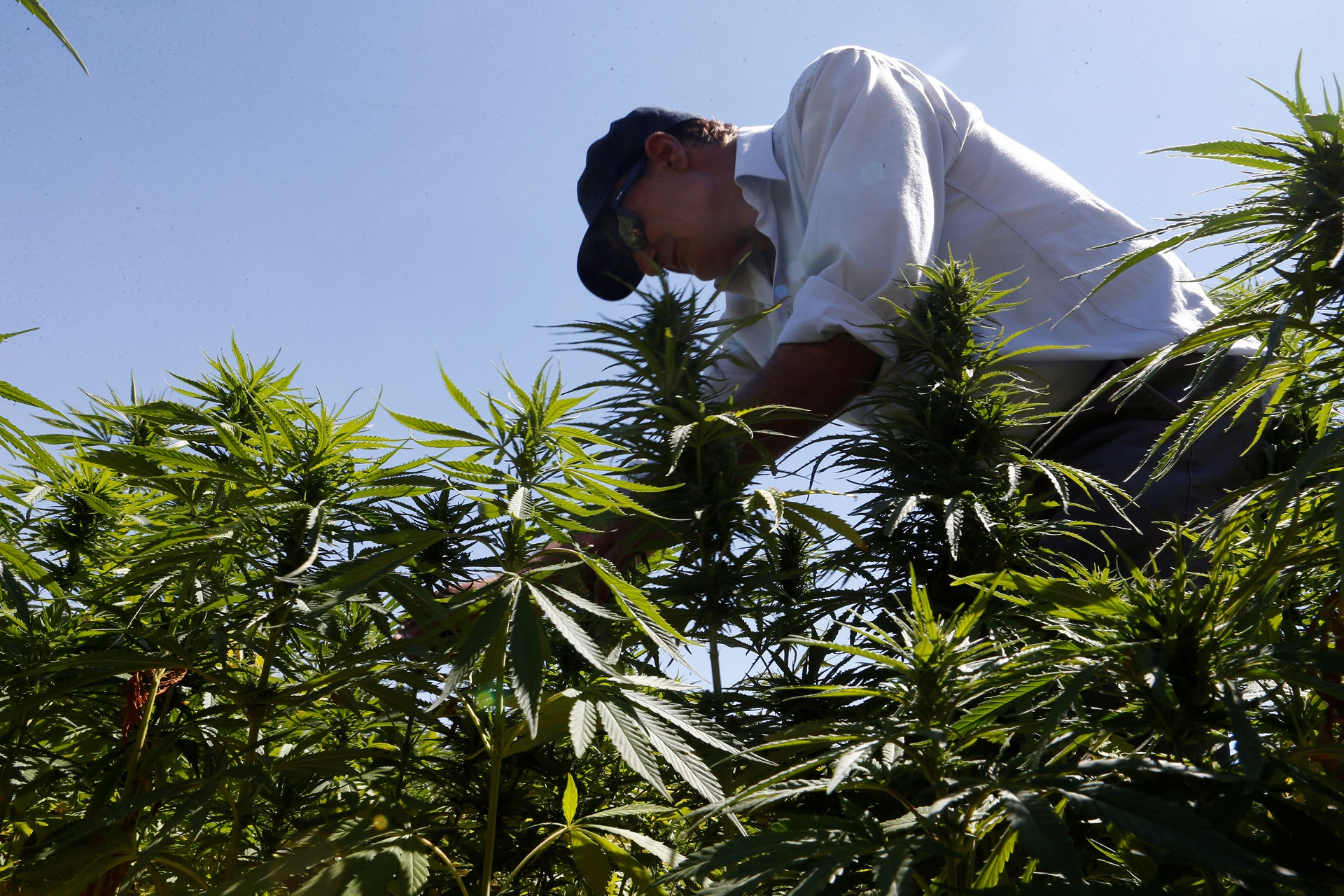 AdvisorShares Pure US Cannabis ETF: a Good Vehicle to Approach the Buzzword Еmerging Sector